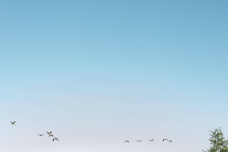 Casamento romântico no verão da Alemanha, Casamento na alemanha, brasil e alemanha, hochzeit, braut, Learn to pronounce brasilianischer Fotograf in Deutschland, brasilianische Hochzeit in Deutschland, casamento brasileiro na alemanha, casamento alemão, noivo, noiva, casamento no lago, Seepark Zülpich, Zülpich, Seepark, Seepark Zülpich Hochzeit